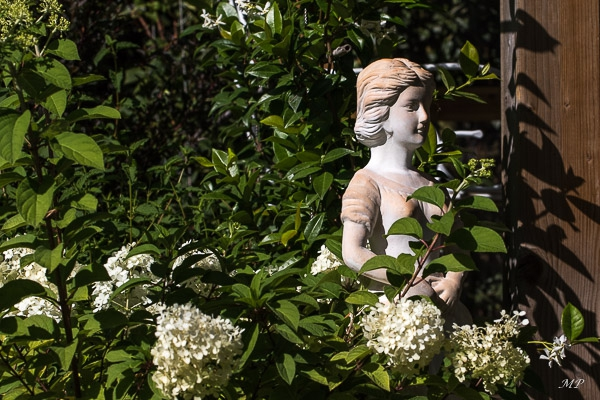 Hortensia Paniculata bobo