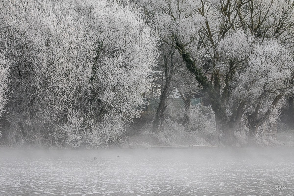 L'étang Ste Suzanne à St-Coulomb un matin d'hiver