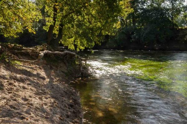 Le Loiret - Pointe de Courpain