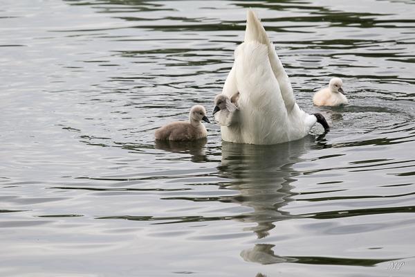 Accrochons-nous, maman plonge !