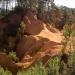 Les ocres de Roussillon en Provence