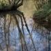 Les eaux bleues de Tavers (45)