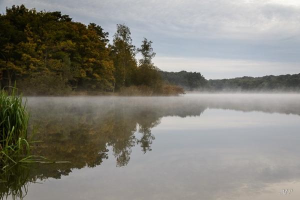 L'étang de la Vallée en Forêt d'Orleans