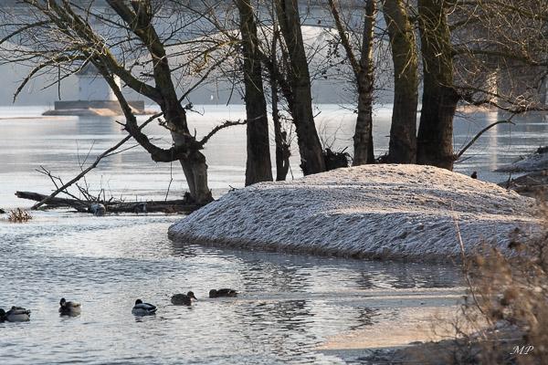 Un îlot de Loire