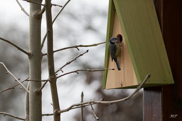 Préparation du nid