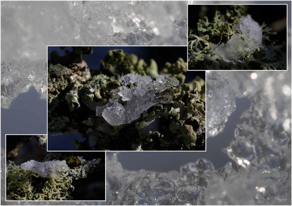 Quelques lichens