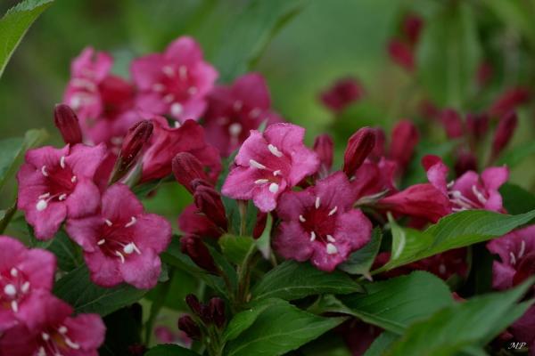 Festival de fleurs au jardin