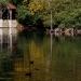 Le Loiret à Olivet