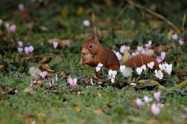 Ecureuil affamé